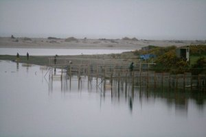 Whitebait fishing stands.
