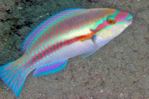 slippery dick Picture