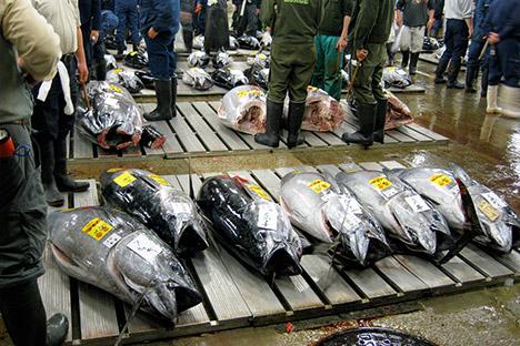 Blue fin tuna at market.