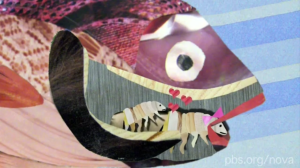 animation of parasitic crustacean that replaces fishes' tongue making love in the fish's mouth