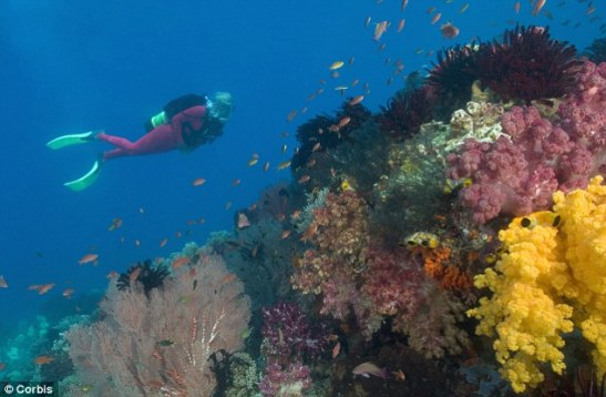 the Coral Triangle, site of a new Indonesian shark and manta ray sanctuary, is home to nearly 600 different species of reef-building corals