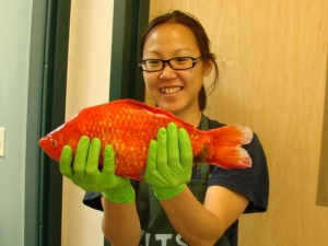 Giant goldfish from Lake Tahoe, California-Nevada USA