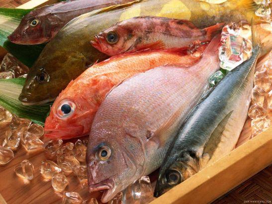 Fish displayed at a fish market