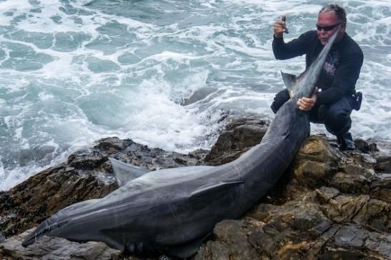 Leon Bekker and great white shark