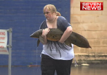 woman rescuing an Australian lungfish during a flood